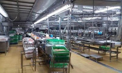 ABPA e SINDIAVIPAR defendem a retomada da produção da Avenorte